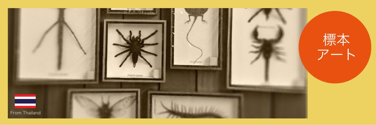 標本アート